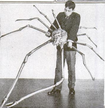 Biggest spider crab in museum.