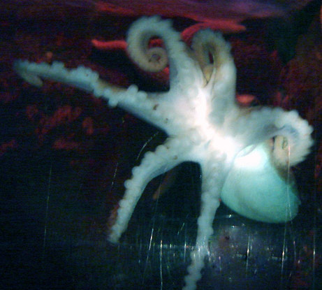 six-legged octopus